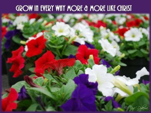 Grow in every way more and more like Christ