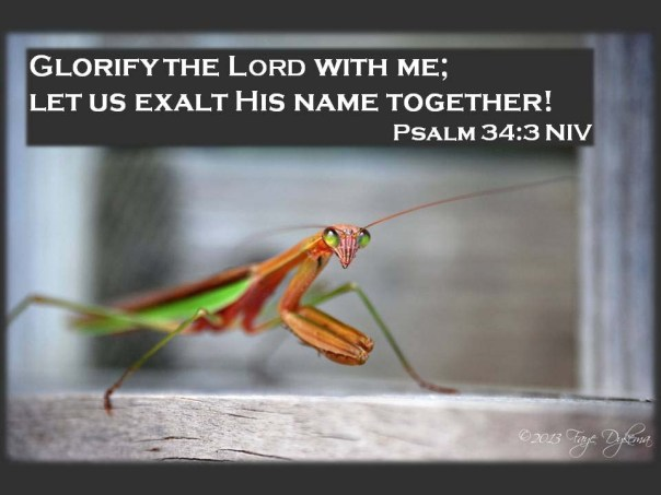 Ps 34_3 Glorify God with me - Praying Mantis web
